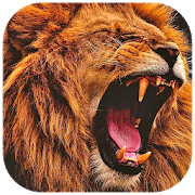 ? Lion Wallpapers ? - Lion Backgrounds