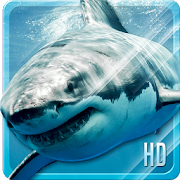 Shark HD Live Wallpaper